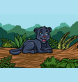 young black panther in jungle vector image vector image