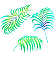 Palm leaves vector image vector image