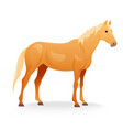 Realistic horse with red coat vector image vector image