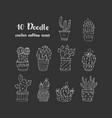 cactus succulents vector image
