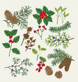 hand drawn christmas plants holly vector image vector image