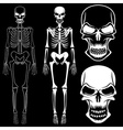 set of skeletons and skulls vector image