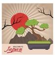 Sun and bonsai tree of Japan design vector image