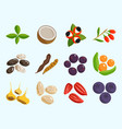 vegetarian food healthy vegetable and fruits vector image vector image