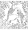 hand drawn toucan bird and ara parrot vector image