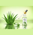 aloe vera plant with fresh drops and dropper vector image