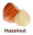 hazelnut icon realistic style vector image vector image