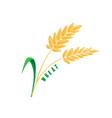 logo icon design maize corn farm vector image vector image