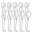 stages of pregnancy vector image