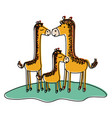 cartoon giraffes couple with calf over grass in vector image vector image