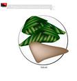 Saksak Papua New Guinean Cuisine vector image vector image