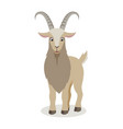 cartoon goat in different poses in flat style vector image vector image