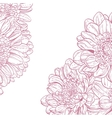 Line drawings pink chrysanthemum vector image