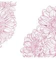 Line drawings pink chrysanthemum