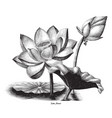 lotus flower botanical vintage engraving clip art vector image