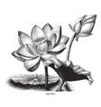 lotus flower botanical vintage engraving clip art vector image vector image