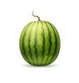 realistic watermelon fruit 3d vector image vector image