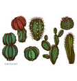 set hand drawn colored cactus vector image
