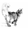Cat portrait Hand drawn vector image
