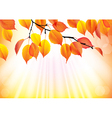 Autumn branch with yellow leaves background vector image