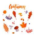 autumn leaf fall poster maple oak acorn vector image
