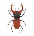 beetle deer vector image vector image
