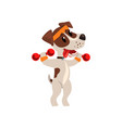 cute jack russell terrier athlete exercisng with vector image vector image