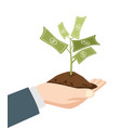 hand holding a dirt with money tree vector image vector image