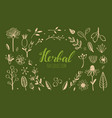 herbal tea and floral doodle set 1 vector image vector image