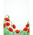 poppies background vector image vector image