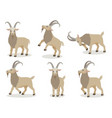 set of goat in different poses in flat style vector image vector image