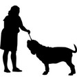 neapolitan mastiff dog with a dog handler at an ex vector image vector image