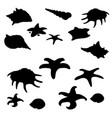 black shape of molluscs shells and starfish vector image