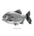 piranha hand drawing vintage engraving vector image