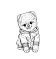 pomeranian toy dig dressed in hoodie hand drawn vector image vector image