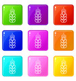 wheat icons set 9 color collection vector image