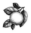 ink sketch apple