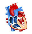 function and definition human heart tridimensional vector image