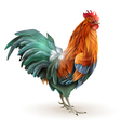 Red Rooster Cock Side View Abstract vector image vector image