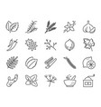 spices and herbs icon set vector image vector image