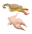 whole raw chicken isolated food vector image