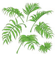 green palm fronds sketch vector image