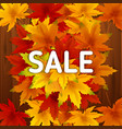 sale autumn background template with falling vector image vector image