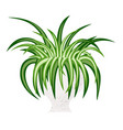 spider house plant isolated vector image vector image