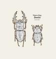 tokara red stag beetle hand draw sketch vector image vector image