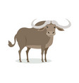 african buffalo cartoon icon in flat design vector image
