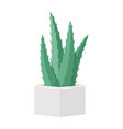 cactus and succulent in pot domestic colorful vector image vector image