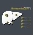 hepatobiliary infographic flat design vector image vector image