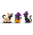 set of halloween black cat vector image vector image