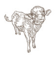 hand drawn cow isolated on white background farm vector image vector image